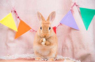 なるほどウサギの写真・画像素材[1917788]