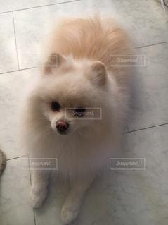 つぶらな瞳の犬の写真・画像素材[2146735]