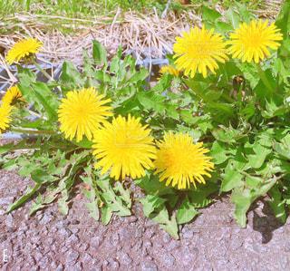 春です♪の写真・画像素材[2095044]