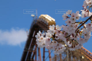 桜とジェットコースターの写真・画像素材[1904682]