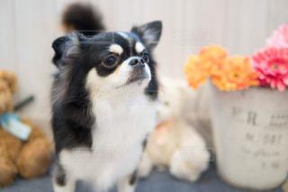 犬の写真・画像素材[2024360]