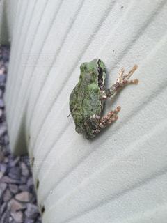 カエルの写真・画像素材[2159441]
