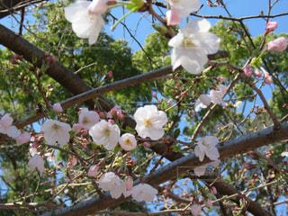 春の訪れの写真・画像素材[3113574]