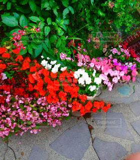 「庭の花」の写真・画像素材[1963112]
