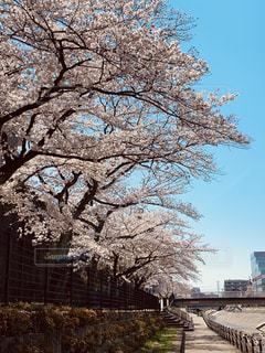 春の散歩道の写真・画像素材[1917268]