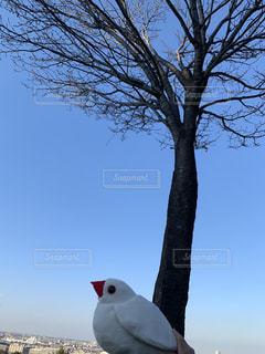 文鳥と青い空の写真・画像素材[1917967]