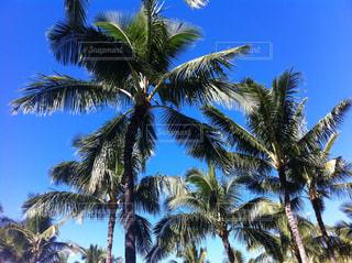 青い空とヤシの木の写真・画像素材[1982259]