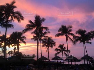 ヤシの木とピンクの空の写真・画像素材[1982269]