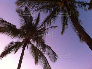 紫色の空とヤシの木の写真・画像素材[1982597]