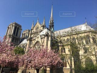ノートルダム大聖堂と桜の写真・画像素材[2033943]