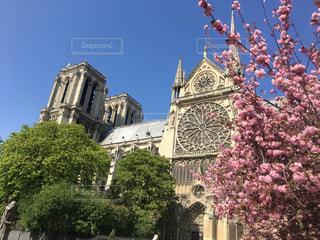 ノートルダム大聖堂と桜の写真・画像素材[2033944]