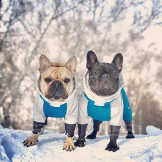 雪山の上の愛犬の写真・画像素材[1917374]