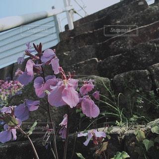 自然 - No.68779