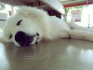犬 - No.76597