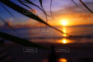 夕日のビューの写真・画像素材[815827]