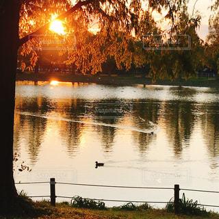 公園の池と沈む夕陽の写真・画像素材[1899601]