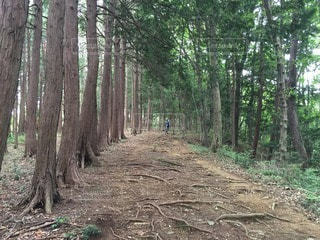 森林の写真・画像素材[69341]