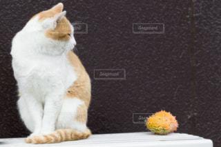 猫とドラゴンフルーツの写真・画像素材[1975869]