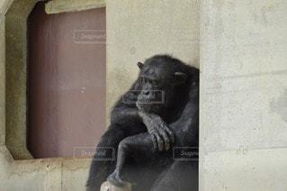 動物の写真・画像素材[73355]