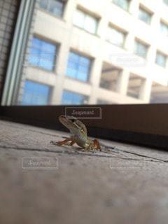 動物の写真・画像素材[73359]