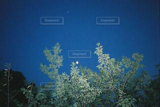 夜と木と月の写真・画像素材[2168890]