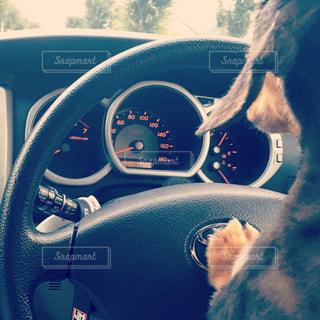 車の座席に座っている犬の写真・画像素材[1911354]