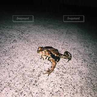 動物の写真・画像素材[575536]