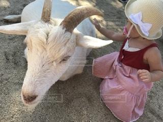 ヤギと女の子の写真・画像素材[1944172]