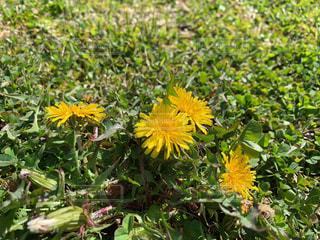 花の写真・画像素材[2063522]