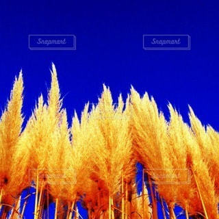 自然の写真・画像素材[75068]