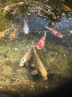 水の中の魚の群れの写真・画像素材[1891069]