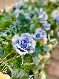 夢の国の青いお花(造花)の写真・画像素材[1897717]