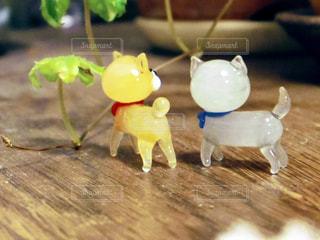 ミニチュア柴犬たちの後ろ姿の写真・画像素材[2010858]