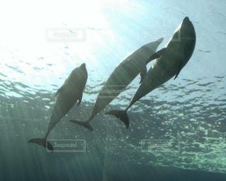 イルカの写真・画像素材[3206577]