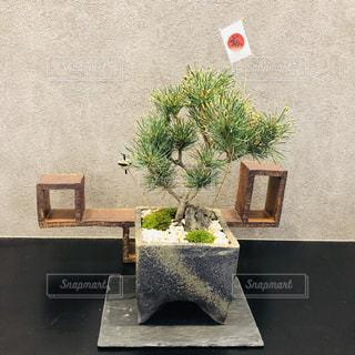 お正月の松盆栽の写真・画像素材[1943075]