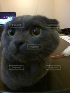 猫の写真・画像素材[14011]