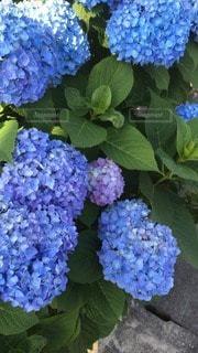 自然の写真・画像素材[45328]