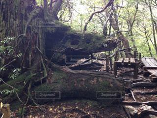 倒木の写真・画像素材[1981736]