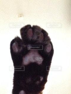 猫の写真・画像素材[69331]
