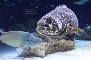 水の中の魚の群れの写真・画像素材[1912460]