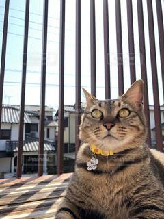 日光浴の猫の写真・画像素材[1919092]