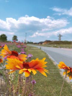 黄色い花の写真・画像素材[2126381]