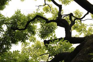 木の陰の写真・画像素材[2060015]