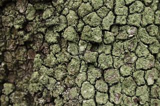 苔むした樹皮の写真・画像素材[2078875]