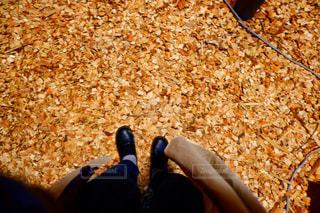 落ち葉の絨毯の写真・画像素材[1904784]
