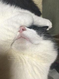 No.69226 猫