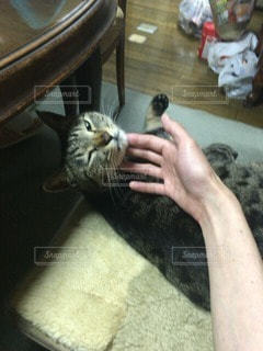 猫 - No.69234