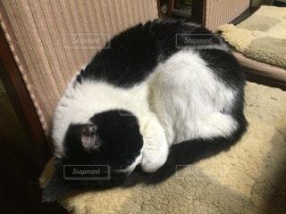 猫三昧 - No.74937
