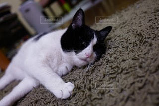 猫三昧 - No.74940