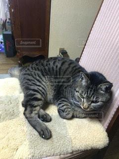 猫三昧 - No.75186